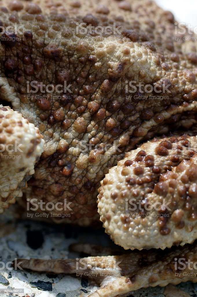Skin surface of the toad stock photo