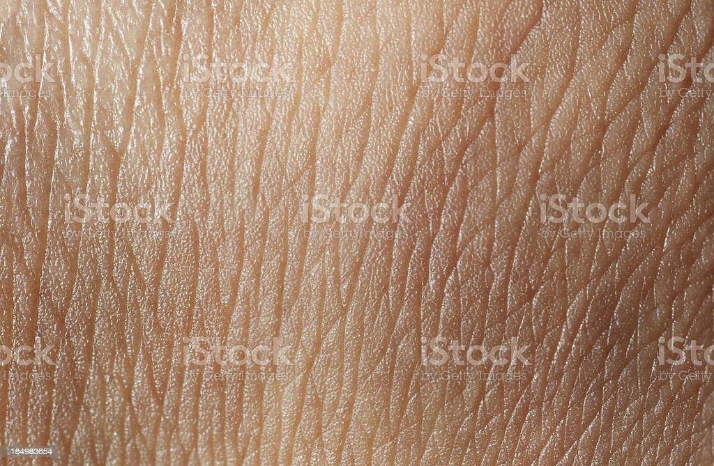 skin texture stock photo