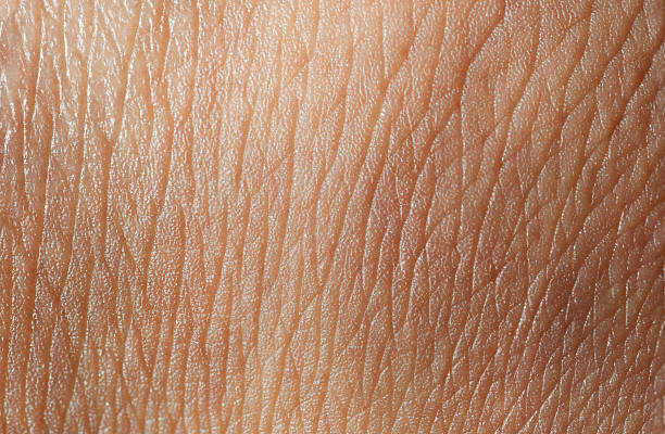 skin texture - human skin stock photos and pictures