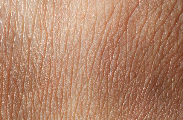 skin texture - menselijke huid stockfoto's en -beelden