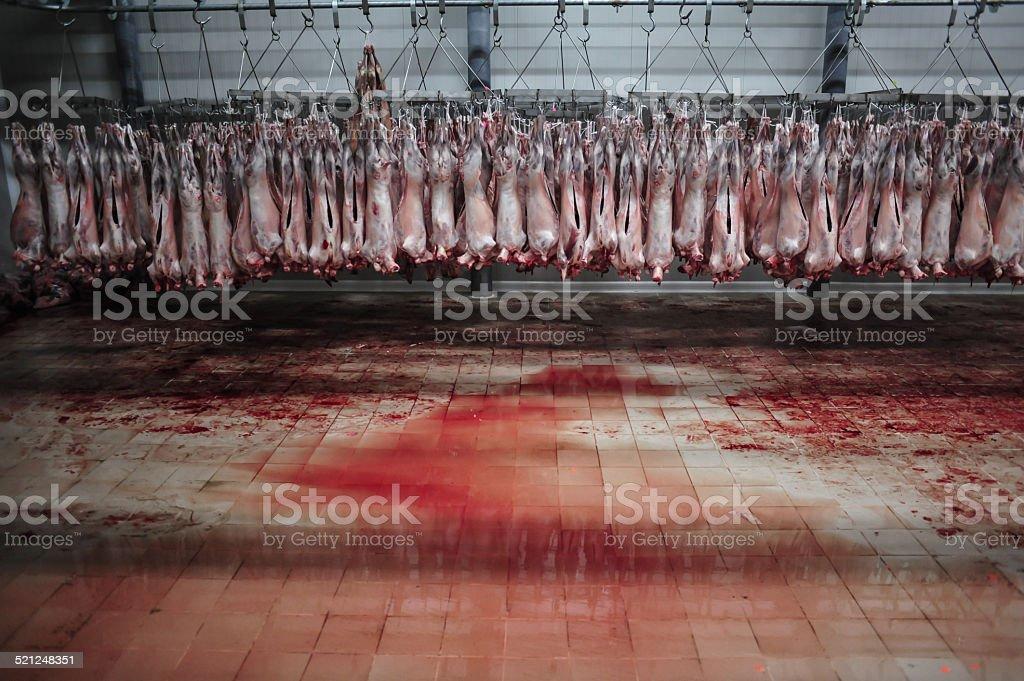 Peau d'agneau de Pâques - Photo