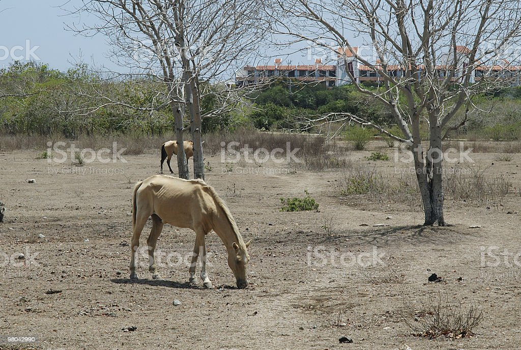 Skinny horse royalty-free stock photo