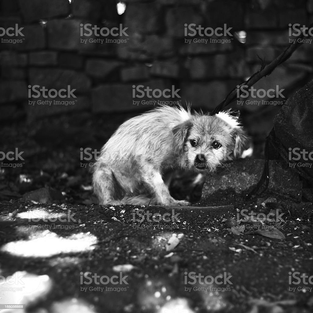 Skinny Thin puppy with abused look stock photo