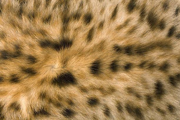 skin's texture of hyena - hyena stockfoto's en -beelden