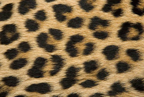 Die Textur der Haut mit Leopardenmuster – Foto
