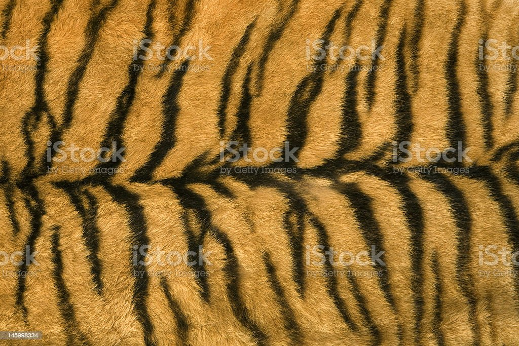 Skin's texture of tiger royalty-free stock photo