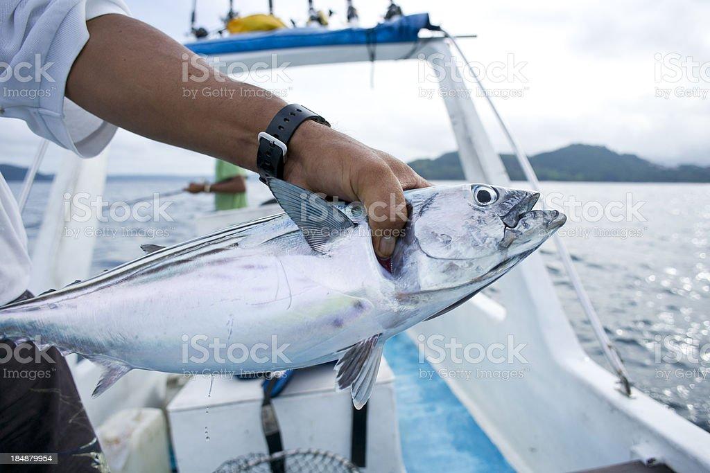 Skipjack tuna stock photo