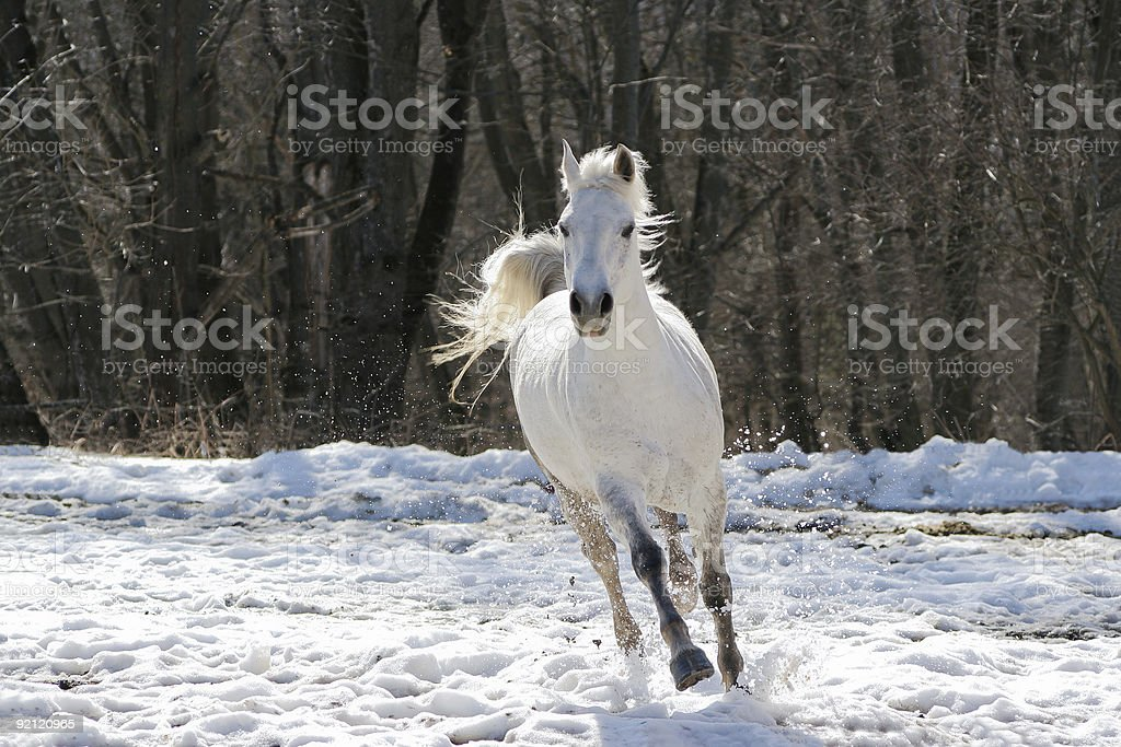 Skipping white horse royalty-free stock photo