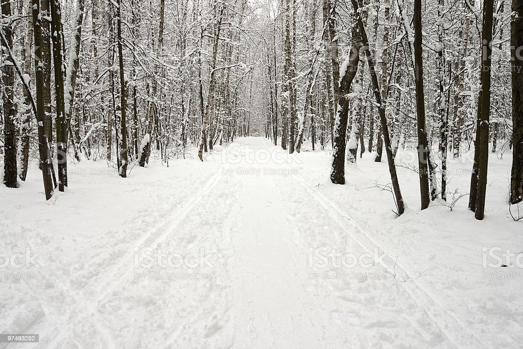 ski-run in winter forest royalty-free stock photo
