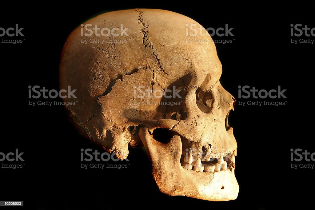 Skull 2 royalty-free stock photo