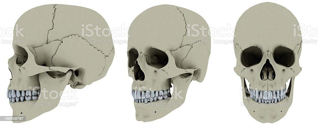 Skull anatomy in 3 positions stock photo