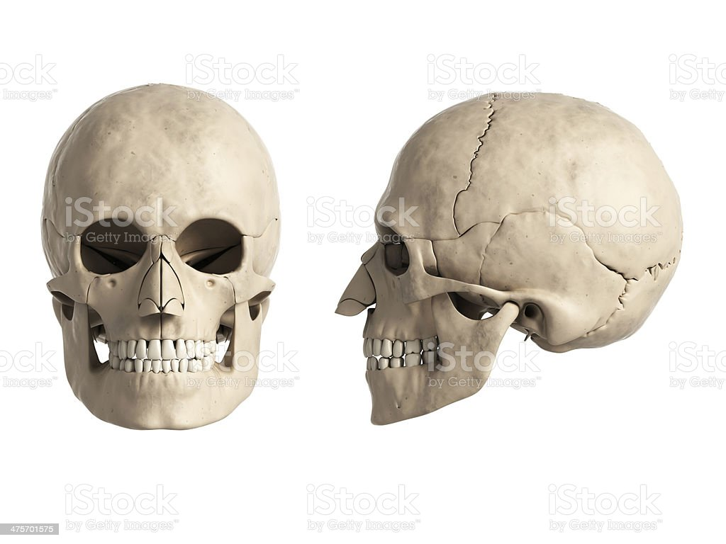 Skull Anatomy Stock Photo More Pictures Of Abstract Istock