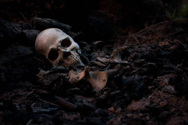 skull and bones digged from pit in the scary graveyard which has dim light - osso umano foto e immagini stock
