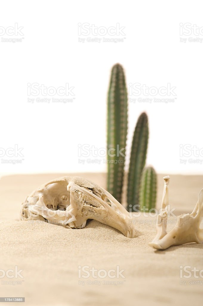 Skull and cactus in a desert stock photo