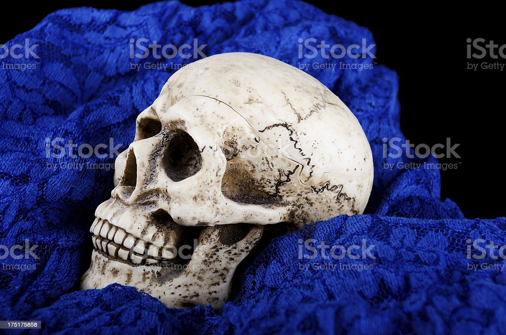 Skull candy dish snugled in blue lace. stock photo