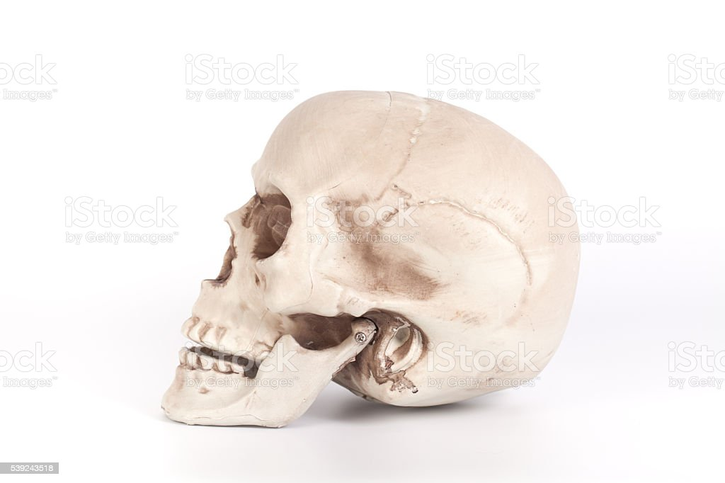 Skull facing side ways isolated on a white background royalty-free stock photo