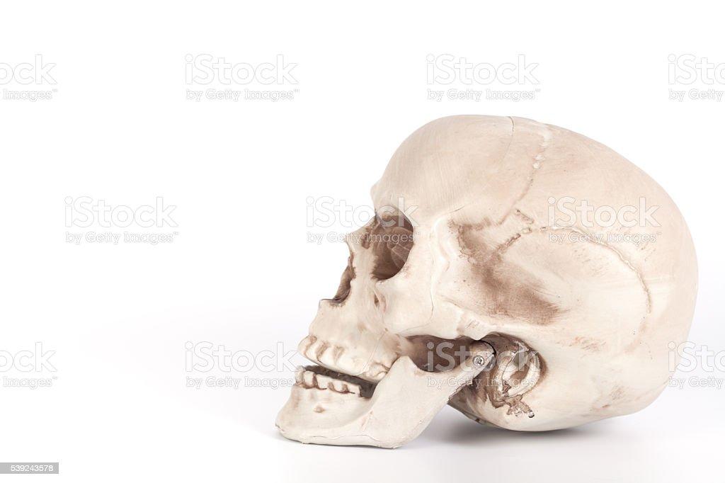 Cráneo lado formas aislado sobre un fondo blanco foto de stock libre de derechos