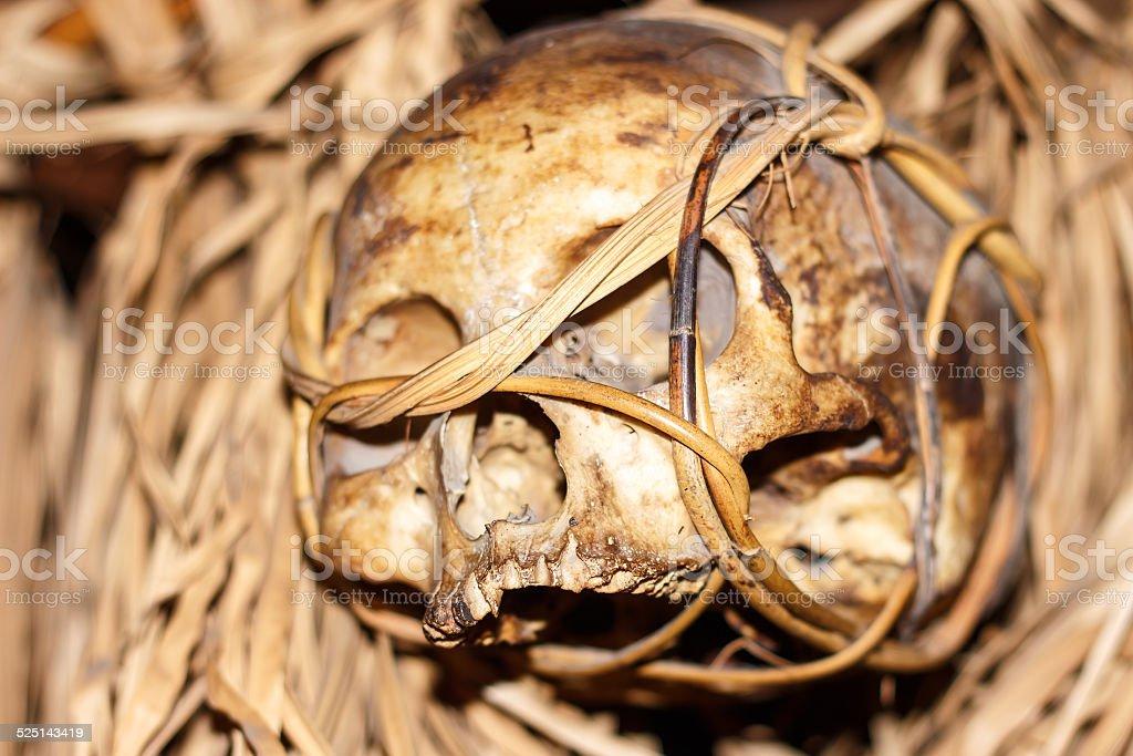 skull from the borneo headhunter. stock photo