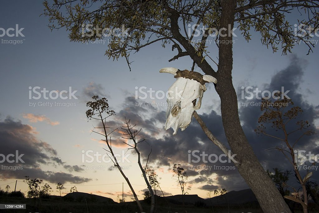 skull hang by a tree at sunset royalty-free stock photo