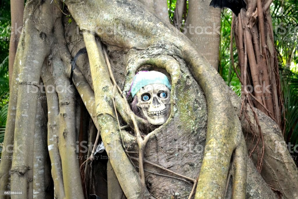 skull in a tree royalty-free stock photo
