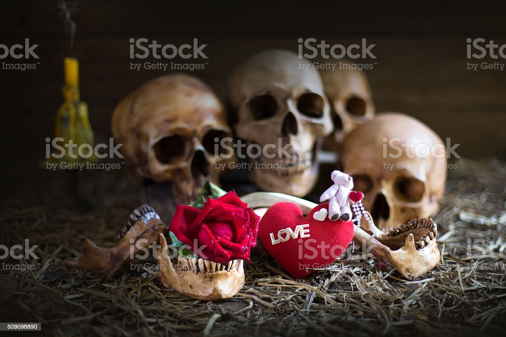 Skull in love with red rose for valentine day stock photo