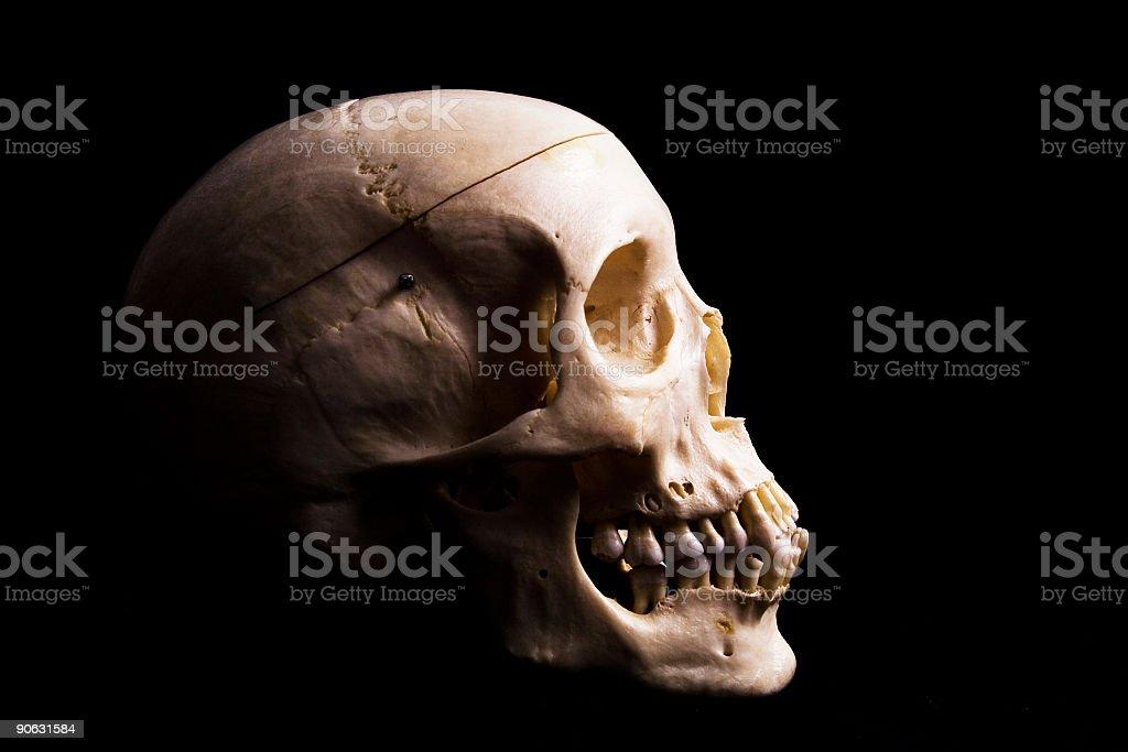 Skull in profile stock photo