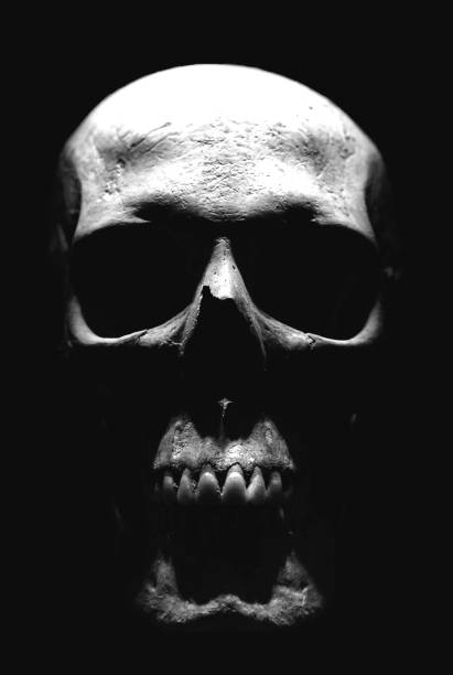 Skull Isolated stock photo