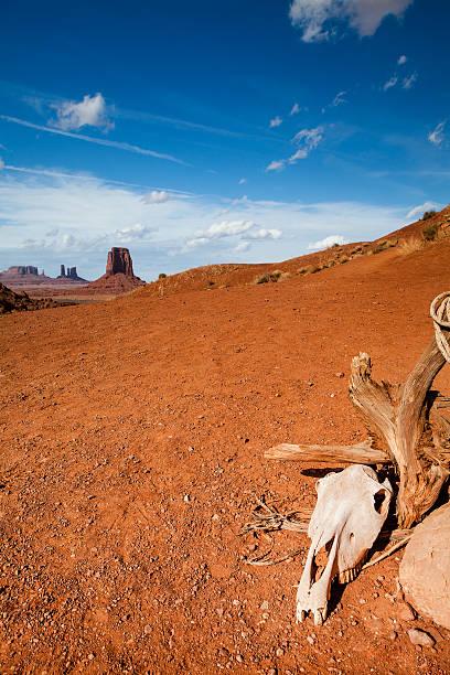 skull monumet valley - arizona - usa - navajo stil stock-fotos und bilder