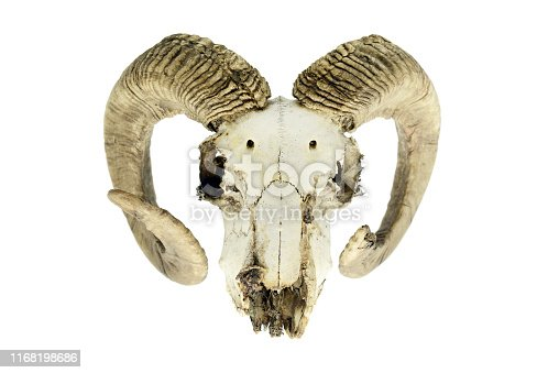 1151385192istockphoto Skull of a goat on white isolated background. 1168198686