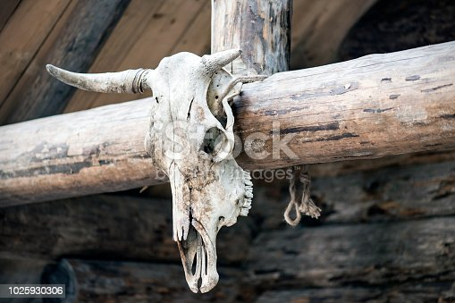 Skull of a wild animal on a wooden house, spooky and horror theme