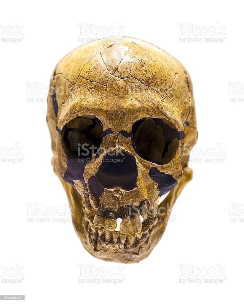 Schädel von Homo Neanderthalensis – Foto