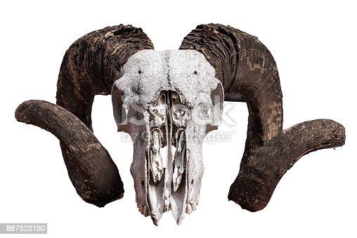 1151385192istockphoto skull of ram isolated 887323150