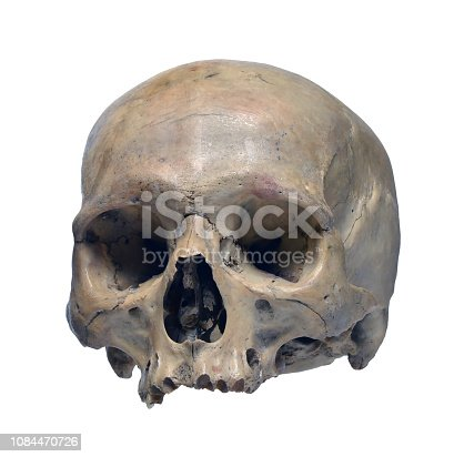Skull of the human on a white background.
