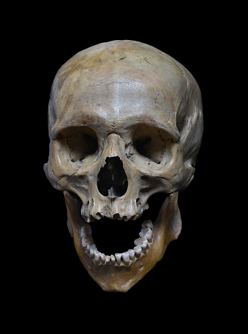 Skull Of The Human Stock Photo Download Image Now iStock
