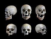 人の頭蓋骨