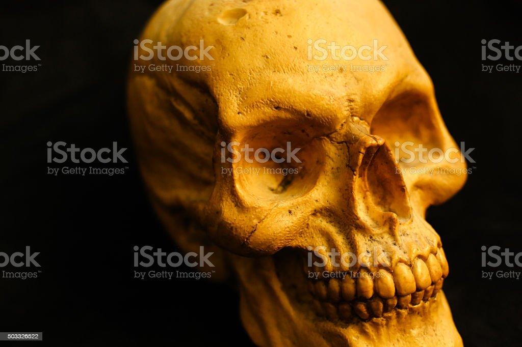 skull on black background stock photo
