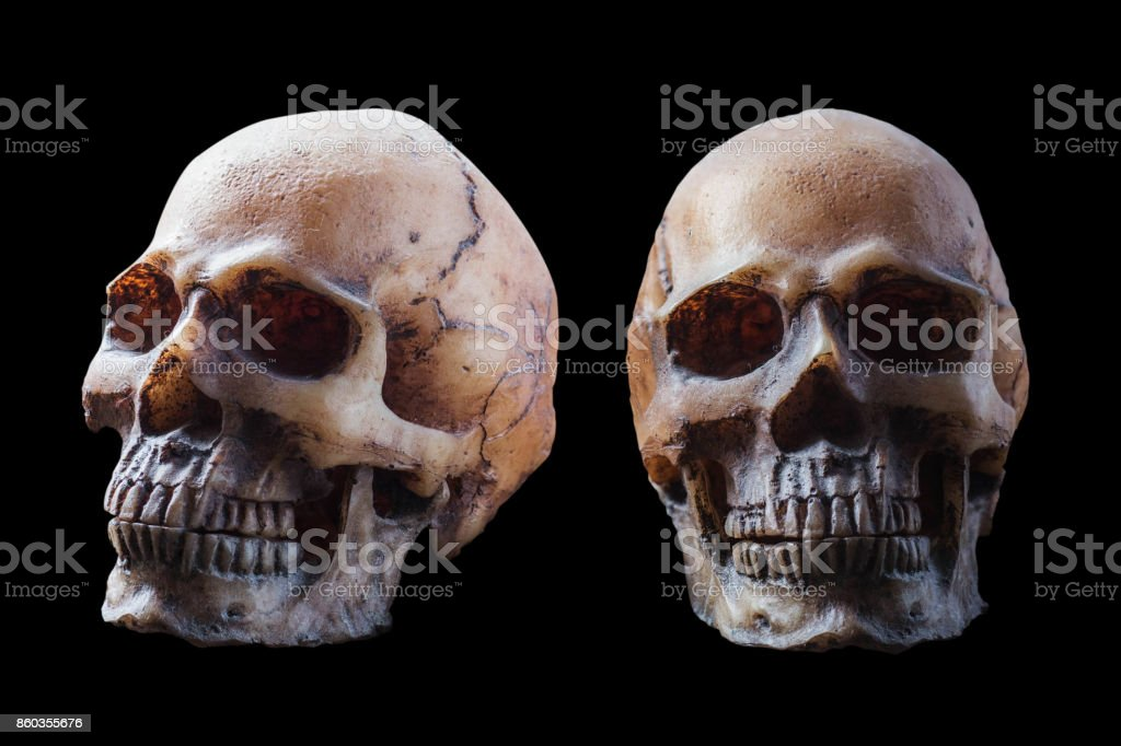 skull on black background. stock photo