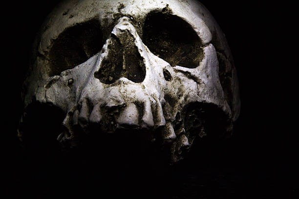 skull on dark stock photo