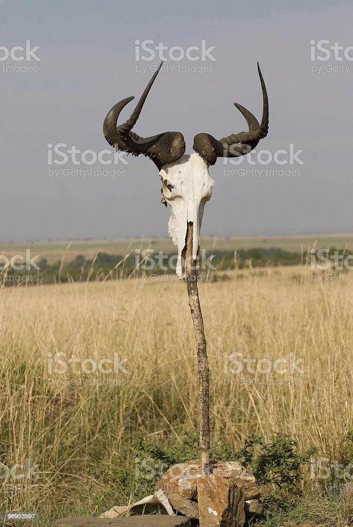 Skull on Stick Masai Mara, Kenya royalty-free stock photo