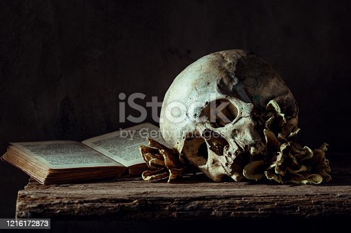 Human skull with dry flowers