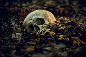 istock Skull 1266969221