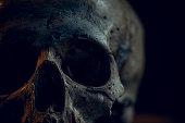istock Skull 1270042562