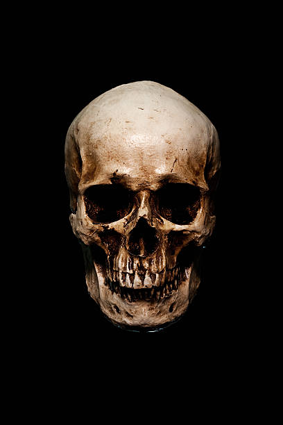 skull skull on black human skull stock pictures, royalty-free photos & images