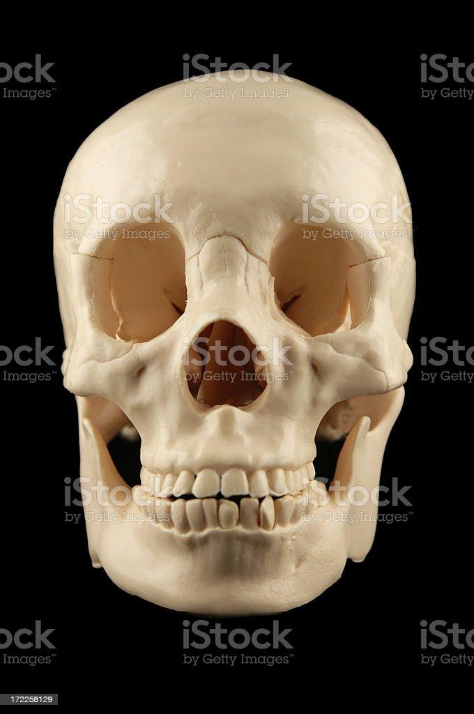 skull royalty-free stock photo