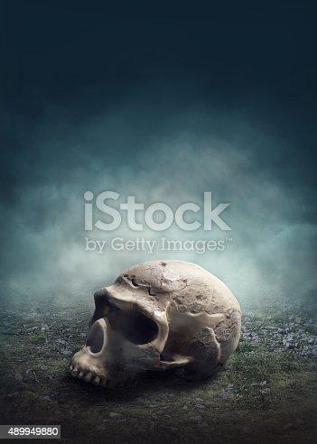 Skull in the foggy field