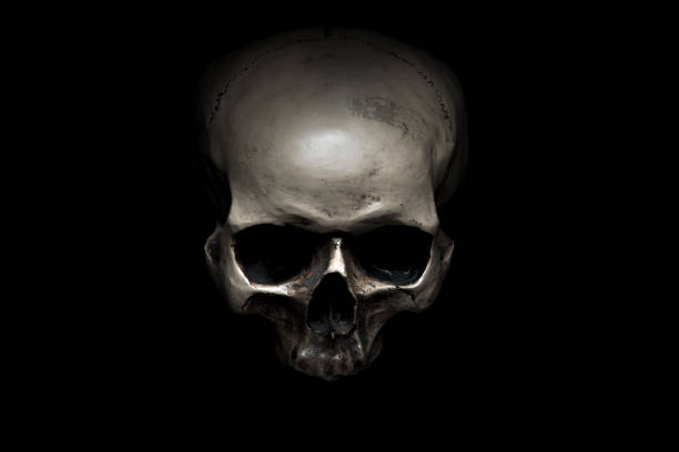 Skull Human skull on black background human skull stock pictures, royalty-free photos & images