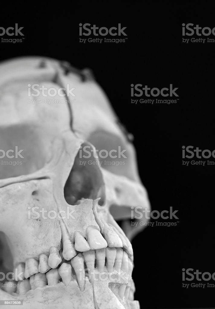 Skull royalty free stockfoto
