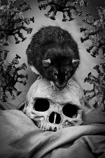 Skull Rat Coronavirus Plague