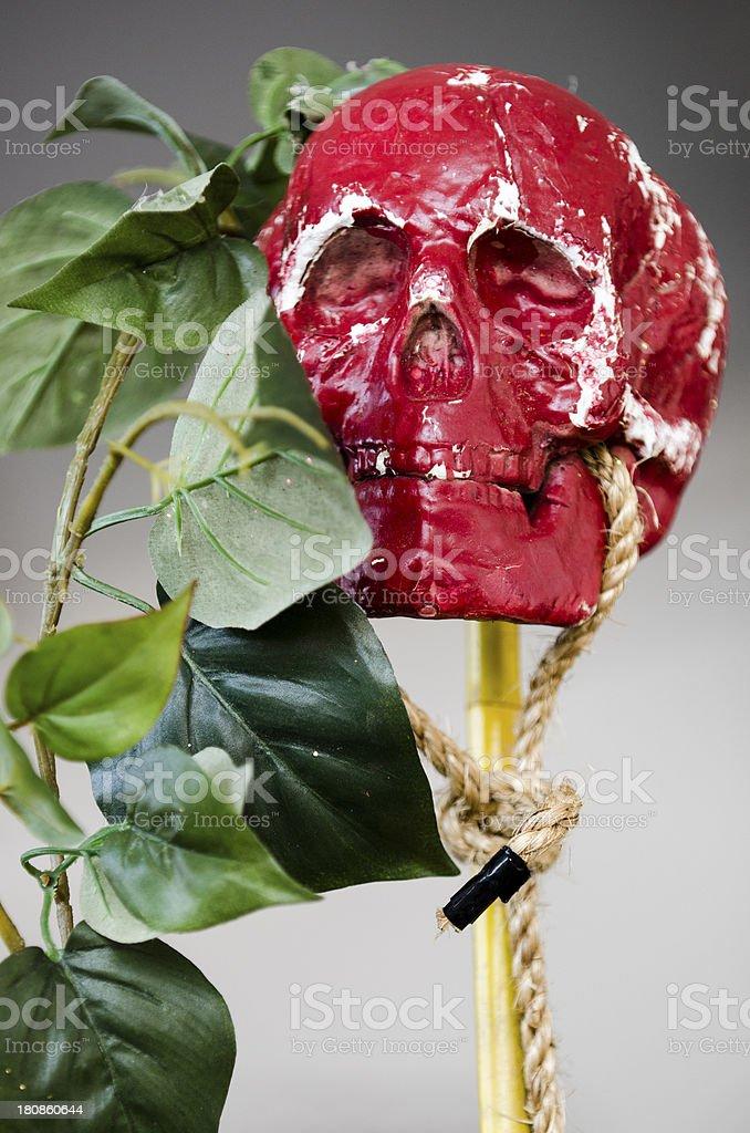 Skull Rose stock photo