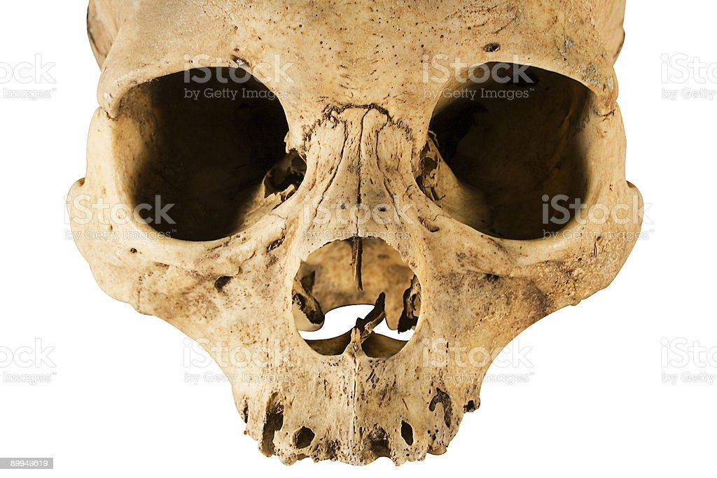 Skull w/ClippingPath (Front View) stock photo